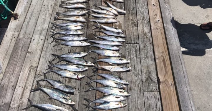 Bobs Bait and Tackle sound/inlet fishing charters OBX.