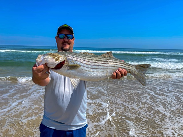 Striped Bass caught in Nags Head NC Surf.